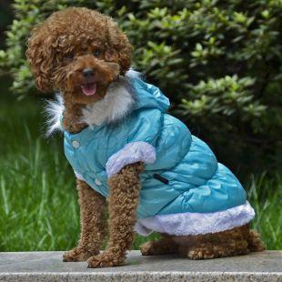 Bunda pre psa s odopínateľnou kapucňou - modrá, L