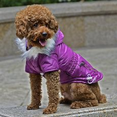 Bunda pre psa s imitáciou vreciek na zips - fialová, XS
