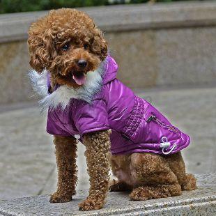 Bunda pre psa s imitáciou vreciek na zips - fialová, M