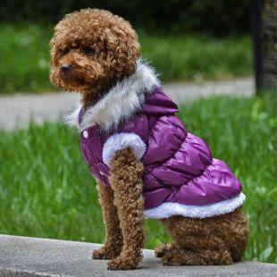 Bunda pre psa s odopínateľnou kapucňou - fialová, S