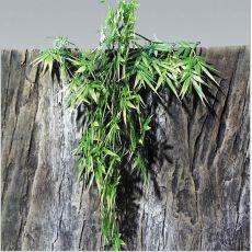 Rastlina do terária TerraPlanta Madagaskar Bambus - 65 cm