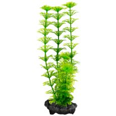 Rastlina Tetra Ambulia, S - 15cm