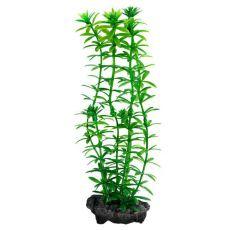 Egeria densa (Anacharis) - rastlina Tetra 30 cm, L