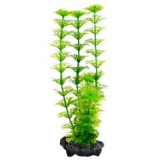 Limnophila sessiliflora ( Ambulia) - rastlina Tetra 23 cm