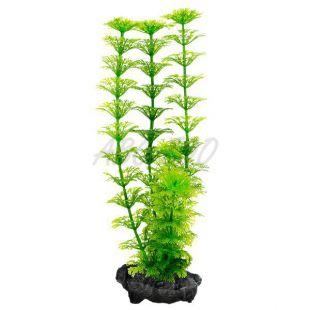 Limnophila sessiliflora ( Ambulia) - rastlina Tetra 30 cm