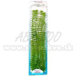 Limnophila sessiliflora ( Ambulia) - rastlina Tetra 46 cm