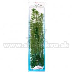 Cabomba caroliniana ( Green Cabomba) - rastlina Tetra 38 cm, XL
