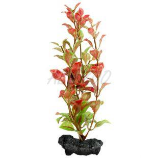 Ludwigia repens ( Red Ludwigia) - rastlina Tetra 15 cm, S