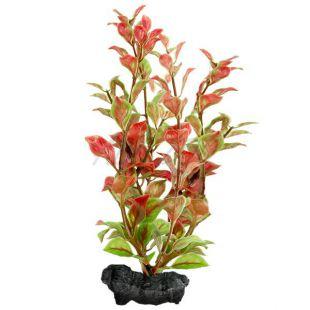 Ludwigia repens ( Red Ludwigia) - rastlina Tetra 30 cm, L