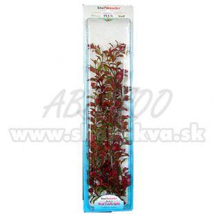 Ludwigia repens ( Red Ludwigia) - rastlina Tetra 46 cm, XXL