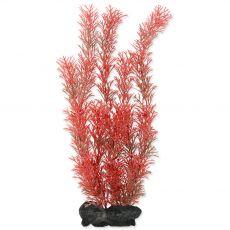 Myriophyllum heterophyllum (Red Foxtail) - rastlina Tetra 30 cm, L