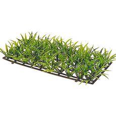 Sagitaria Platyphylla - rastlina Hobby veľkosť 5 cm