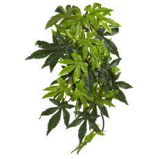 Abutilon Silk Medium - rastlina do terária