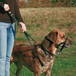 Postroj pre psov tréningový - XS, 15 cm
