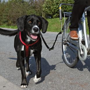 Set pre cyklistov na upevnenie veľkého psa k bicyklu