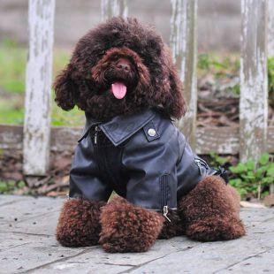 Koženka pre psov - čierna s orlom, XS