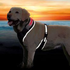 Postroj pre psa so svetelným pásikom M, 50-70cm