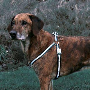 Reflexný postroj pre psa - blikajúci, veľkosť M-L
