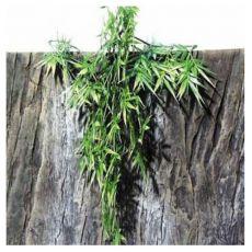 Rastlina do terária TerraPlanta Madagaskar Bambus - 50 cm