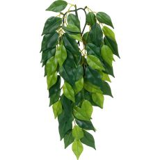 Ficus silk small - rastlina do terária, 45cm
