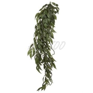 Ruscus Silk Large - rastlina do terária, 70cm