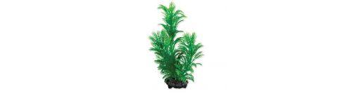 Akvarijných rastlín o ktoré sa nie je potrebné starať. rastliny