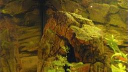 3D skala aj s 3D pozadím v skutočnom akváriu