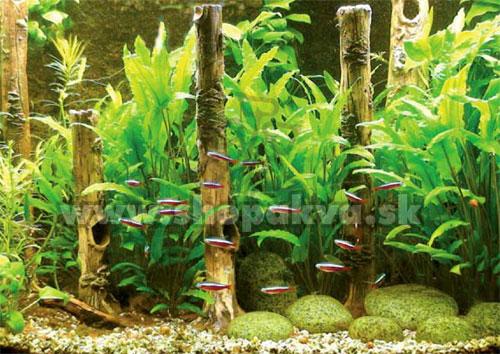 Akvarium s dekoraciou Bambusovy kmeň