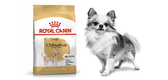 Čistokrvní psi Royal Canin
