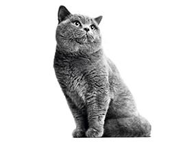 Dospelé mačky Royal Canin