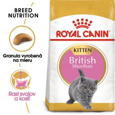 Royal Canin British Shorthair Kitten granule pre britské krátkosrsté mačiatka - 2 kg