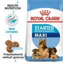 Royal Canin Maxi Starter Mother&Babydog granule pre gravidné alebo dojčiace suky a šteňatá 15 kg