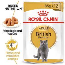 Royal Canin British Shorthair kapsička pre britské krátkosrsté mačky v šťave, 12 x 85 g